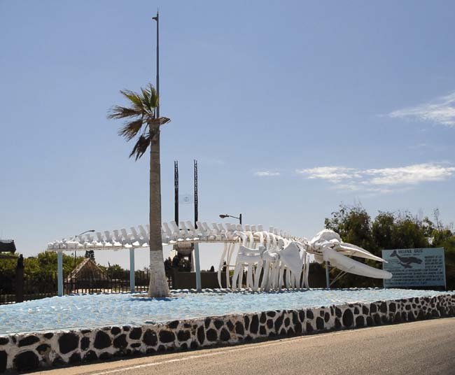 Another drive-by photo...the whale skeleton in Guerrero Negro