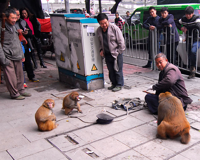 Monkeying around in downtown Chongqing...