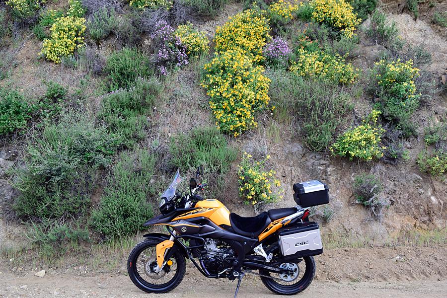 More yellow wildflowers.